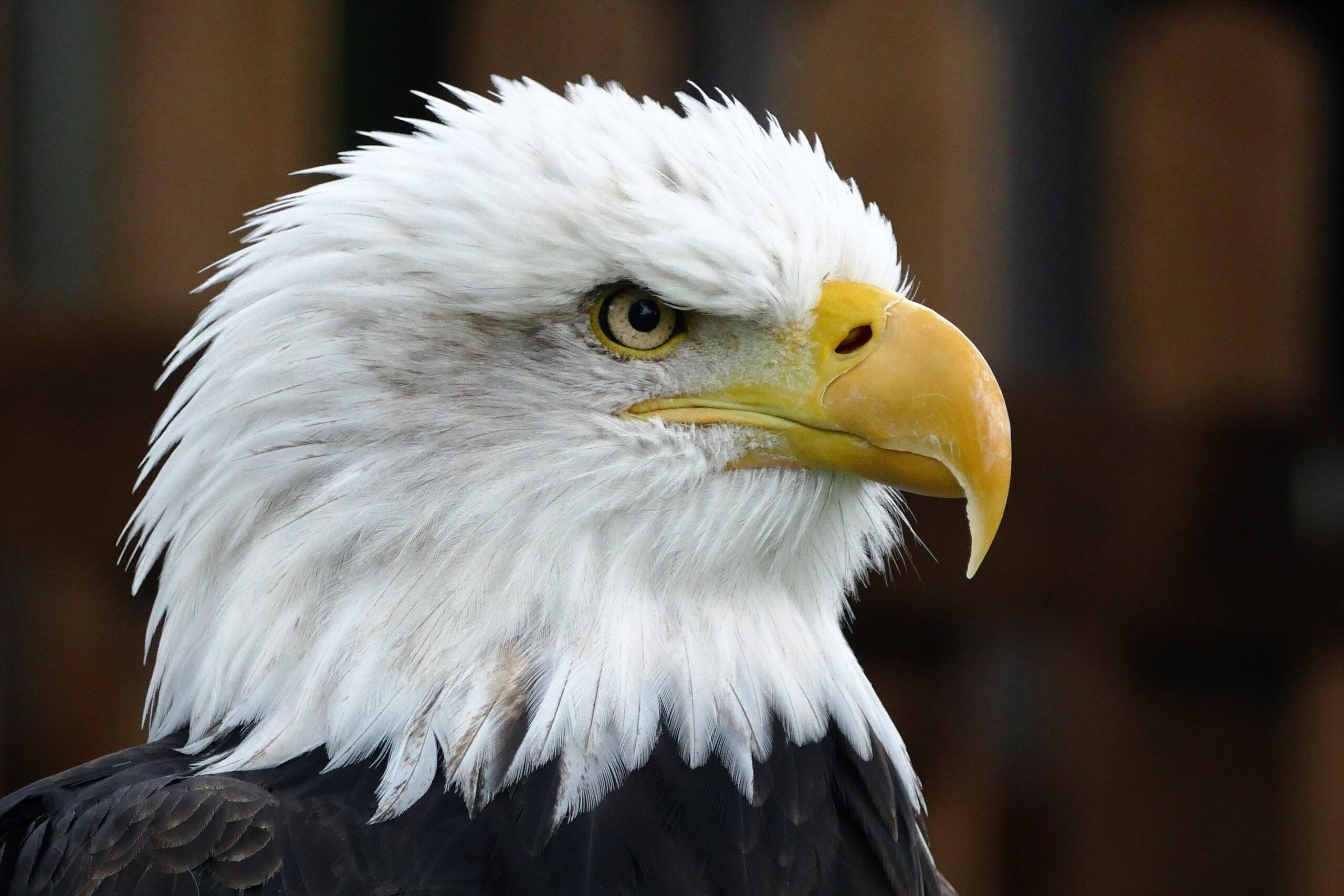 edson's eagles
