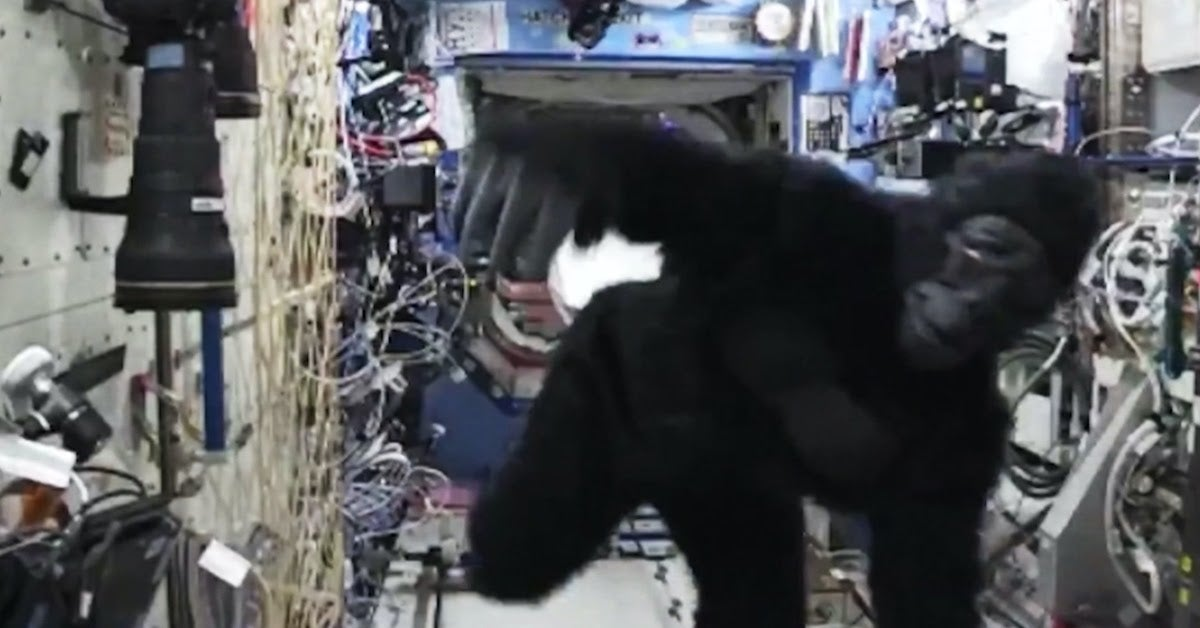 gorilla suit in space