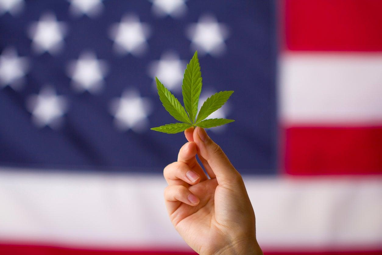 cannabis company