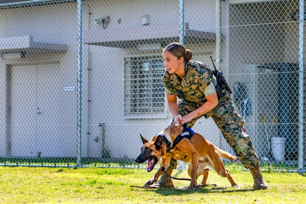 canine partner