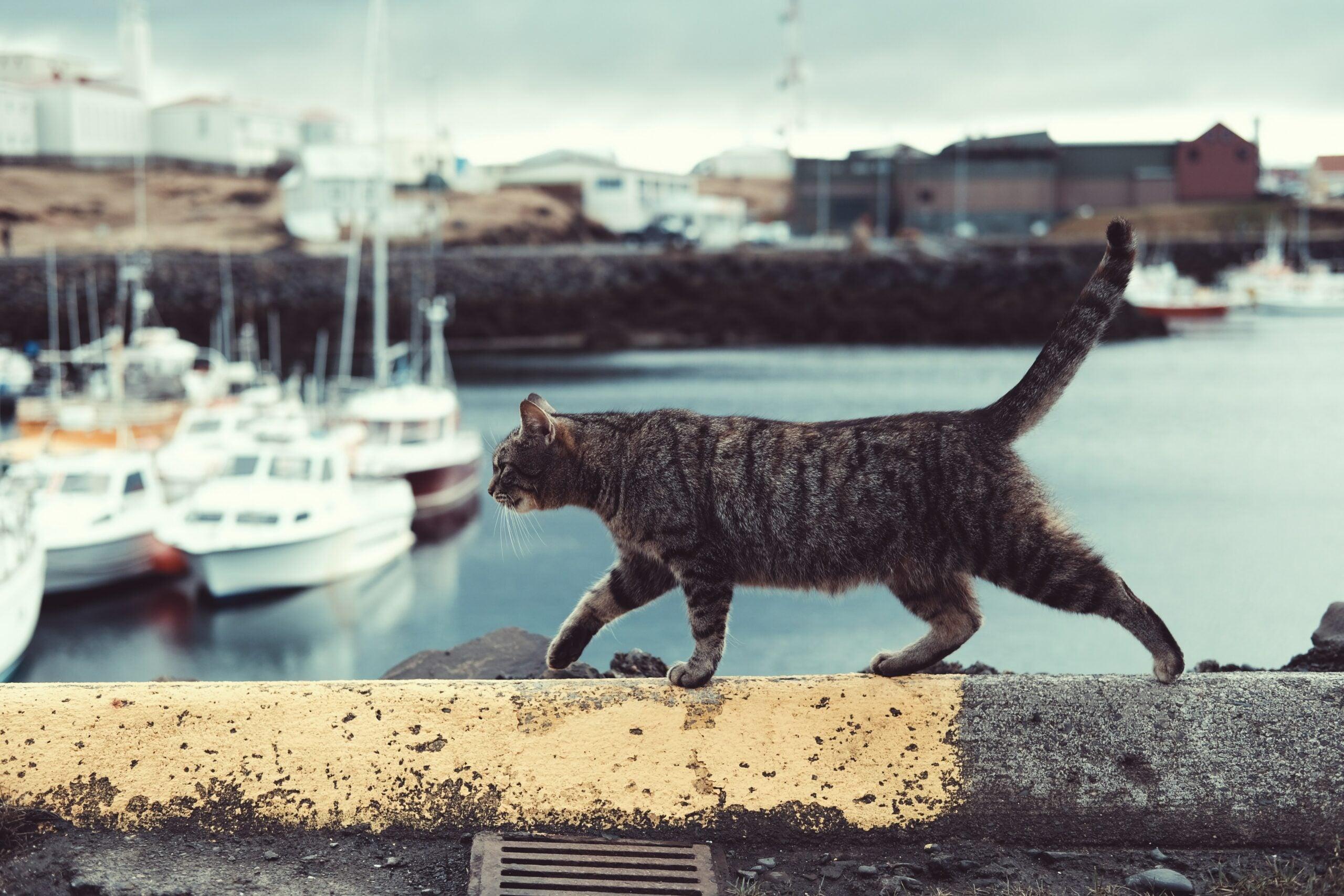 cat on a navy ship