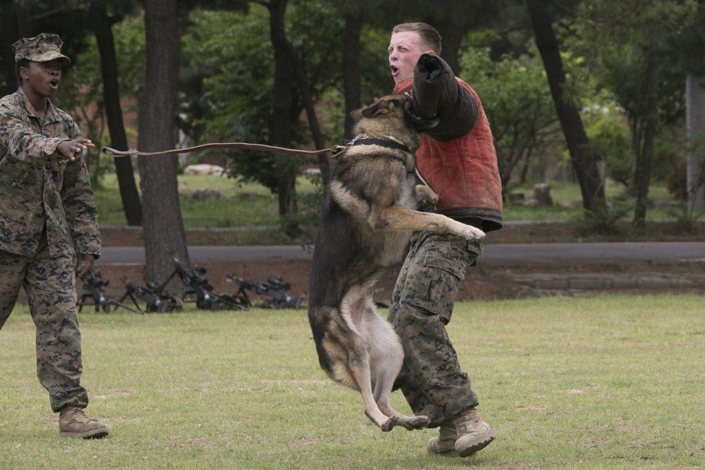 10 reasons all troops should have a pet