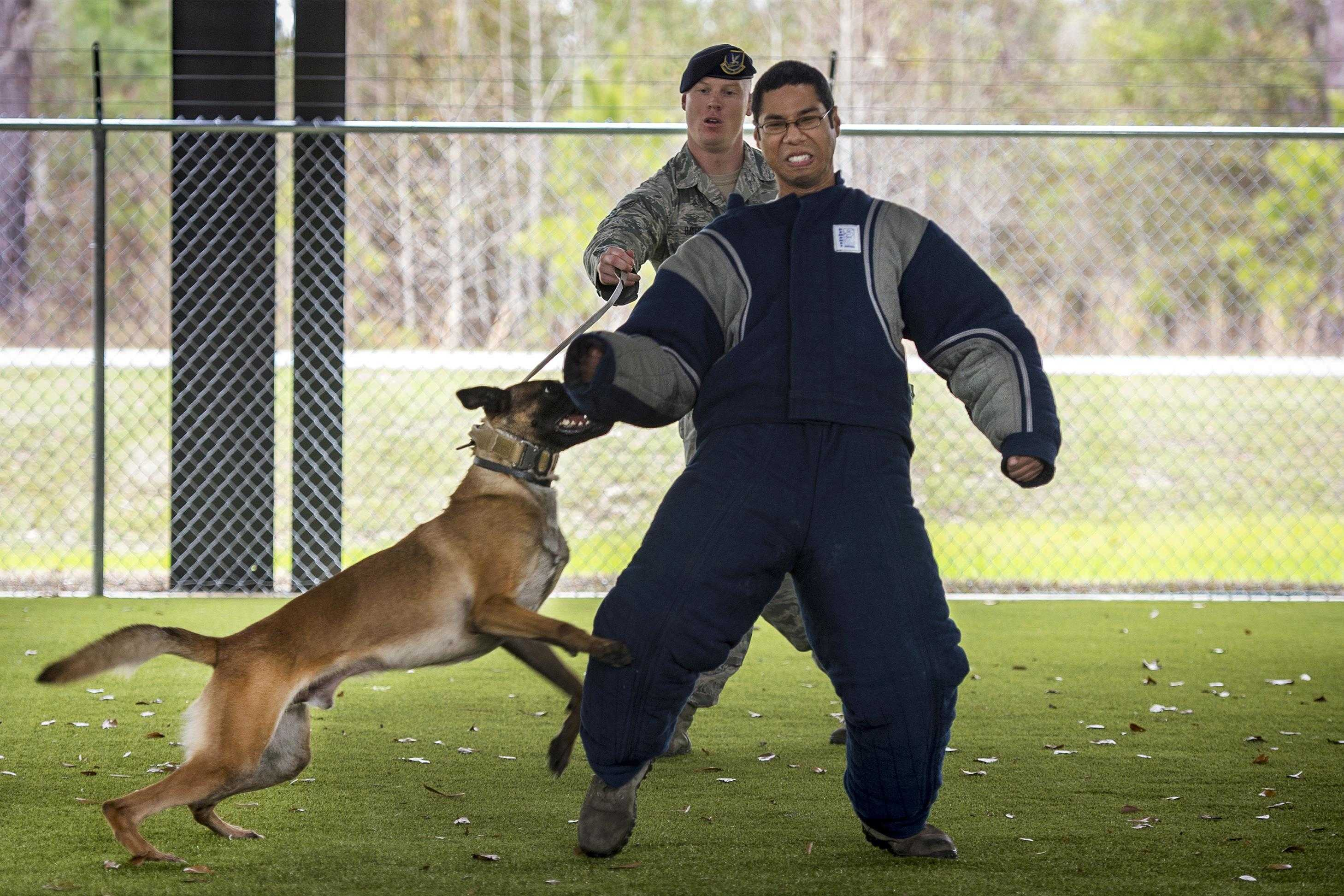 8 photos that show how a military working dog takes down bad guys