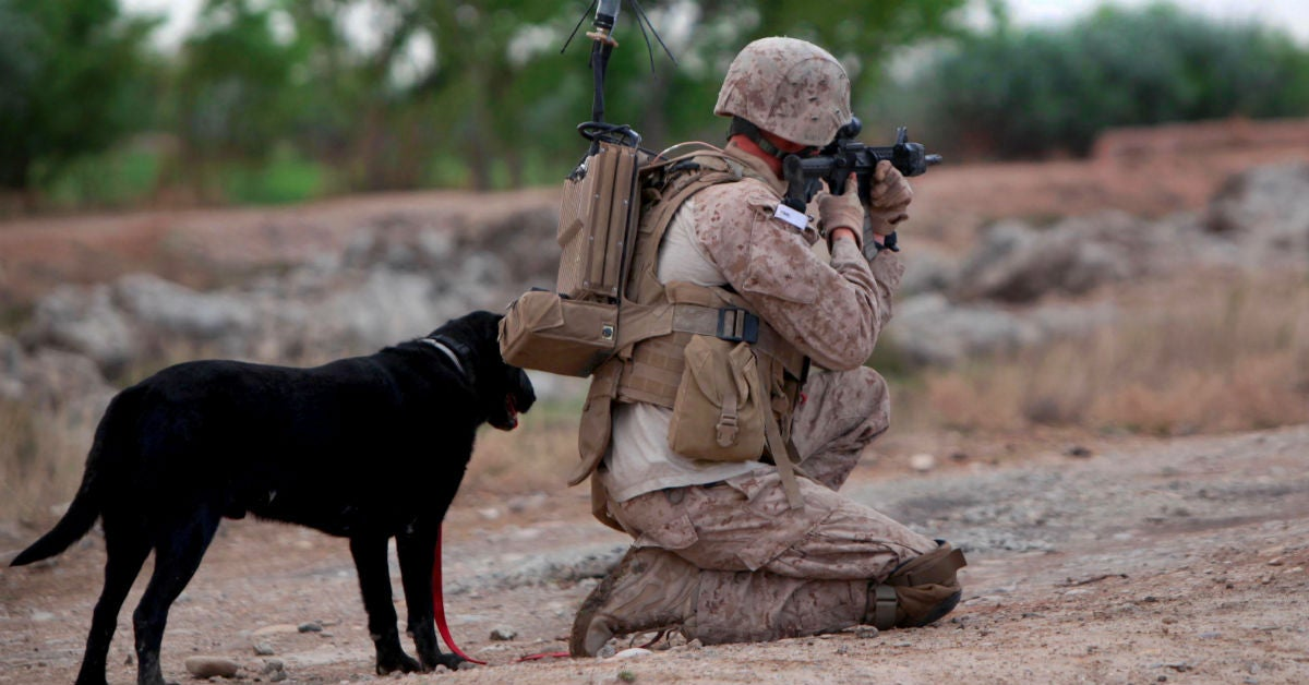 Hero Marine working dog Cena laid to rest at the 'Arlington of dogs'