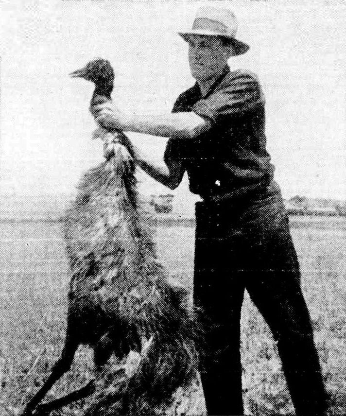 That time Australia fought a war against emus… and lost