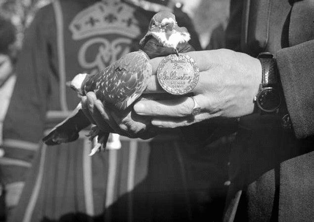 Why pigeons were once the best form of battlefield communication