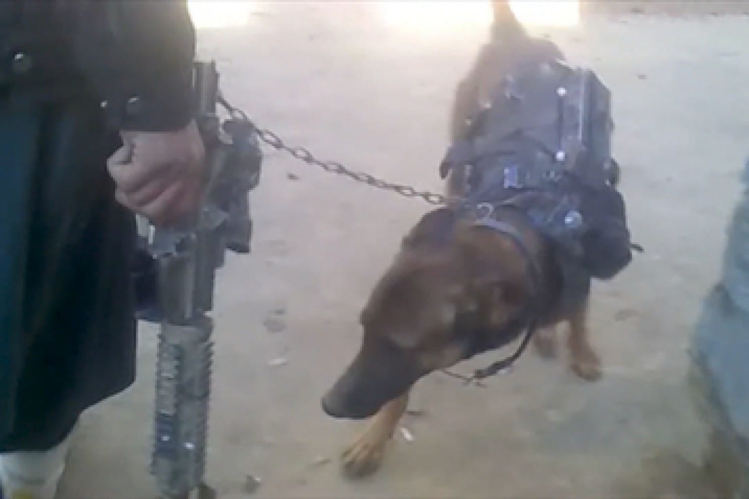 This canine prisoner of war is still held by Taliban captors