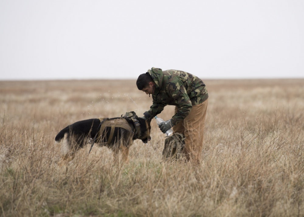 USPS unveils Military Working Dog stamps to celebrate our *true* heroes