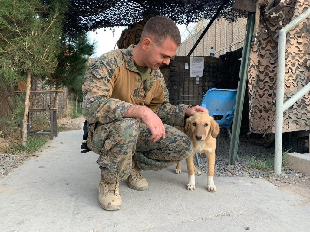 One Marine is on a mission to bring pup home from Afghanistan